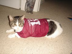 Aggie Kitty