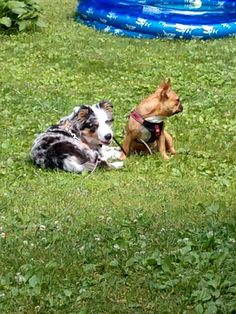 Puppy Sitting, Pond, Corgi, Puppies, Animals, Water Pond, Corgis, Cubs, Animales