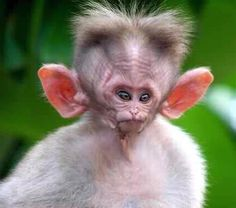 Ugly Animals, Rare Animals, Unique Animals, Cute Little Animals, Animals Beautiful, Animals And Pets, Cute Baby Monkey, Cute Baby Cats, Cute Dogs