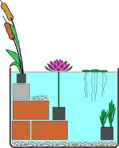 Miniteich Schema - Wasserpflanzen
