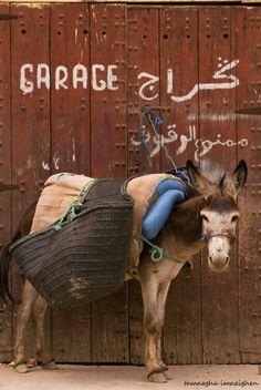News Garage - Morocco Lol Very Laugh New God king