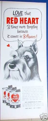 Schnauzer featured in Red Heart print ad