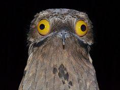 funny-bird3