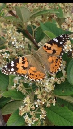 Butterfly Şile/Turkey