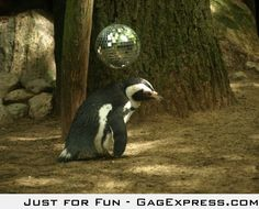 Socially awkward penguin goes to a party