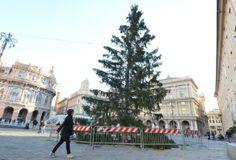 Piazza De Ferrari, #Genova è arrivato l'albero di #Natale, mancano solo gli addobbi.