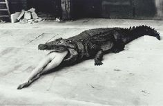 HELMUT NEWTON Crocodile Eating Ballerina, from the Pina Bausch Ballet 'Keushleitslegende', Wuppertal, 1983