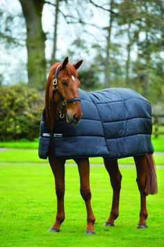 Diffe Types Of Horse Rugs A Guide
