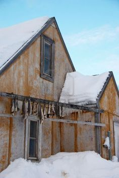 Greenland. Wooden house with dried codfish