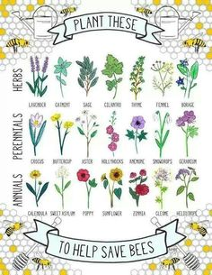 Bee-friendly herbs, perennials and annuals. SAVE THE BEES! No bees, no food. Stop using chemicals! Bee Friendly Plants, Bee Friendly Flowers, Save The Bees, Plantation, Bee Keeping, Geraniums, Dream Garden, Gardening Tips, Organic Gardening
