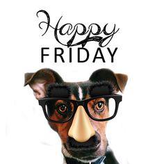 Happy Friday from Jack the Bindery dog! Friday Dog, Happy Friday, Dogs, Doggies, Pet Dogs, Dog