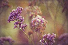 Vintage flowers by Vrinda W., via Flickr