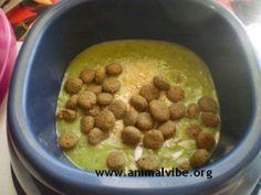 Cani vegani pappa con crocchette e zucchine