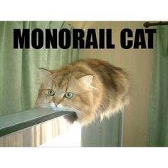 Der Transrapid unter den Katzen.
