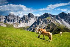 Am Fuße der Kalkkögel - Innsbruck, Hiking, Horses, Mountains, Dogs, Nature, Sports, Travel, Nice Asses