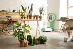 Op de vensterbank hebben je planten het helemaal naar hun zin.Maar wil je een keer iets anders?
