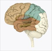 Alzheimer's disease is an irreversible, progressive brain disease that slowly destroys memory and thinking skills and, eventually even the ability to carry out the simplest tasks of daily living.