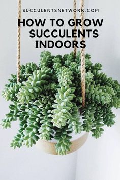 Ultimate guide to grow succulents indoors. Learn where to place for the best light and more #succulent #indoors #guide #clickhere Drought Resistant Plants, Lower Lights, Desert Cactus, Succulent Care, Christmas Cactus, Succulents Garden, Cacti, Floral Arrangements, Herbs