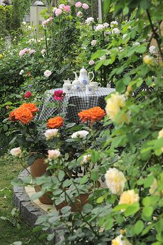 Imagine the fragrance of tea time in the rose garden...