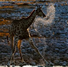Wildlife Photography by Shem Campion