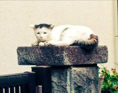 今日の散歩中に見かけた猫。元気出せよ。