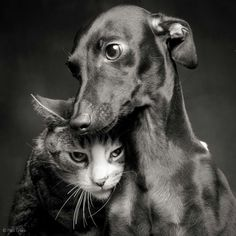 Love this photo...:)