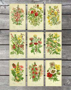 Instant download set of 9 vintage botanical prints Scanned