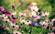 цветы, трава, поле