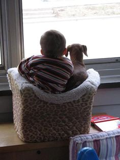 Buddies ....photo from Alison Warren at https://www.facebook.com/ilovedachshunds