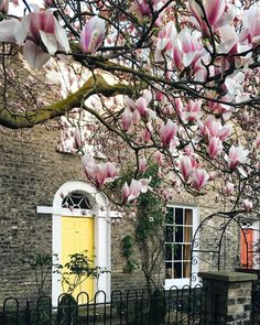 "5,502 lượt thích, 158 bình luận - ❥ elżbieta ellie dyduch (@dy_ellie) trên Instagram: ""🌸Magnolia game going strong in #Cambridge. Some trees look like chandeliers 🤔. • Many of you have…"""
