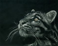 Scratchboard Art, Clouded Leopard, Scratch Art, Cute Animal Pictures, Wildlife Art, Cute Animals, Wild Animals, Spirit Animal, Big Cats