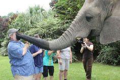 Elephant Snorking tourist