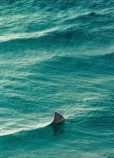 Shark    -   Muriwai, Auckland, New Zealand    -    2011    -    Cuba Gallery photography   -    https://www.flickr.com/photos/cubagallery/5348061775/