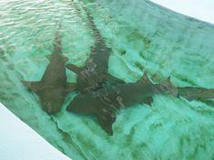 Gulfarium... Destin, Florida...