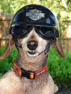 Ridin' a bike with my doggles - what could be more fun in San Diego!?~Rosies Harley-Davidson Motorcycle Gear, via Flickr.