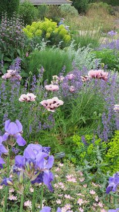 The Gravel Garden - Beth Chatto. A peach helianthemum, blue iris, salmon…