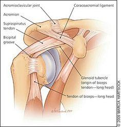 Biceps, Shoulder Rehab, Shoulder Problem, Shoulder Tension, Shoulder Anatomy, Bicep Tendonitis, Bicep Muscle, Ligaments And Tendons, Shoulder Injuries