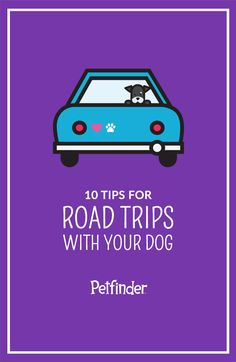 Road trips are fun, but if you're taking your dog, make sure you're prepared. Plan to make pit stops every 2-3 hours and never, under any circumstances, leave your dog alone in the car.