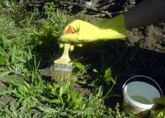 A leghatékonyabb házi gyomirtó! Így szabadulhatsz meg a legkönnyebben a gaztól! - Bidista.com - A TippLista!