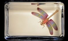 Bernard Maisner - Single Dragonfly Hand Painted Paper Weight -- -- Custom Social Stationery, Fine Engraved Stationery, Wedding Invitations and Hand Lettering for Advertising, Film & TV