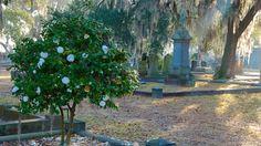 Magnolia Cemetery in Charleston, South Carolina | Expedia-maybe-annual ghost walk in Ocbober