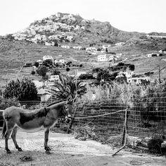 Greek Islands, Camel, Greece, Queen, Animals, Greek Isles, Animales, Animaux, Show Queen