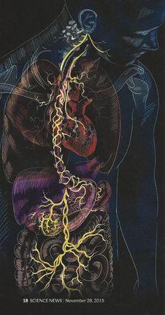 Stress Reduction and the Vagus Nerve Medical Design, Medical Art, Human Anatomy Art, Medical Wallpaper, Biology Art, Brain Art, Vagus Nerve, Medical Anatomy, Anatomy And Physiology
