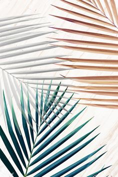 Silver with green and brown palm leaves patterned background Palm Leaf Wallpaper, Flower Background Wallpaper, Screen Wallpaper, Background Patterns, Wallpaper Backgrounds, Palm Background, Aesthetic Iphone Wallpaper, Aesthetic Wallpapers, Foto Online