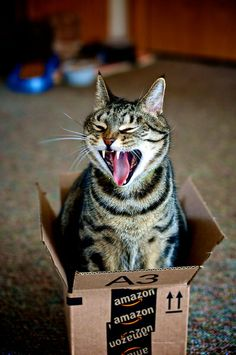 'I protest, I want a Bigger Box than this one!' - Funny not very Happy Cat