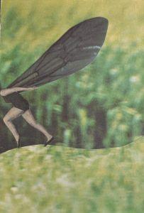 """""""husch, husch die waldfee"""". handcut collage, analog collage by papiertänzerin."""