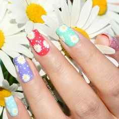 Summer Daisies Nail Art with Picture Polish - Lacquertude
