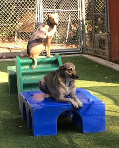 Brandy and Whiskey are on Patrol:) #GuardDogs #DogAntics #TwoPeasInAPod #DoggieDaycare