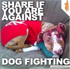 I'm gonna cry😭😭😢😢! This is so sad a I am against dog fighting and the breed doesn't matter wether it be pit bull or boxer. I love all dogs big and small so dog fighting is not part of my life. Stop Animal Testing, Stop Animal Cruelty, Cane Corso, Save Animals, Animals And Pets, I Love Dogs, Puppy Love, Sphynx, Bulldogs