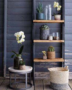 Instagram White Wash Table, The Sunday Times, Large Plants, Decoration, Indoor Plants, Planter Pots, Basket, Shelves, Colors